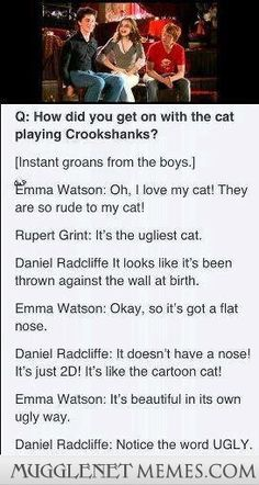 The Harry Potter cast on Crookshanks. I personally thought Crookshanks was adorable. Harry Potter Jokes, Harry Potter Cast, Harry Potter Fandom, Harry Potter Interviews, Harry Potter Theories, Slytherin, Hogwarts, Harry Potter Universe, Crookshanks