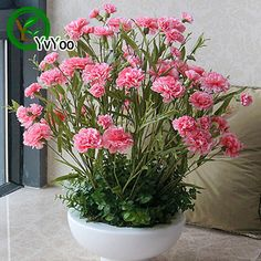 Pink Carnation  Seeds Bonsai Flower Plant Seeds Very Fragrant 50 Particles / lot  L087-in Bonsai from Home & Garden on Aliexpress.com | Alibaba Group