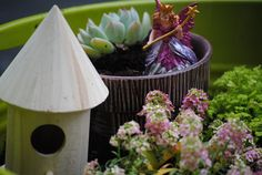 How Does Your ( Fairy ) Garden Grow? | Making Lemonade
