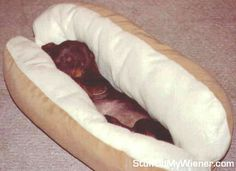 I need two of these Weiner dog beds!  So cute and perfect smugglers for my babies!