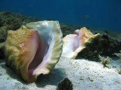 caracolas en el mar