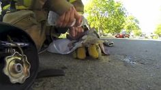 PRÍBEH ROKA! Kalifornský hasič našiel v zadymenej miestnosti bezvládne mačiatko a ihneď začal robiť všetko pre jeho záchranu. Oživoval ju kyslíkovou maskou a ochladzoval vodou. ÚSPEŠNE! :-) Video z tejto dojímavej akcie nájdete na http://tvnoviny.sk/sekcia/zahranicne/archiv/dojimave-video-hasic-zachranil-maciatko-kyslikovou-maskou.html (Foto: YouTube)