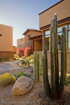 #Arizona #cacti #landscaping - would love to know what type of bush is flowering on the far window