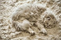 Camouflage #kitty