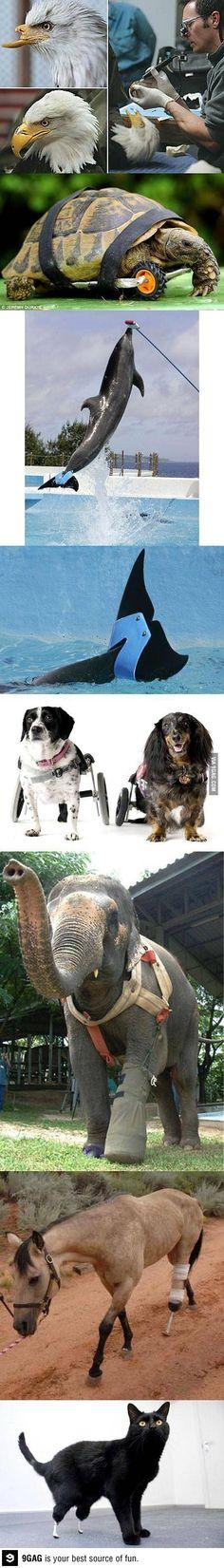 Animaux handicapés sauvés par des vétérinaires