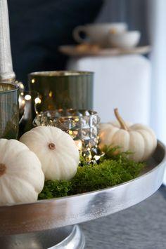 Schöner Schein - Herbstdeko mit Moos und Kürbissen in Weiß. Dazu noch ein paar Samtkissen und die Kuschelzone für den Herbst ist fertig