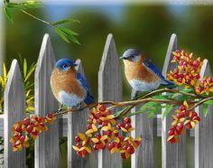 Branche - Oiseaux - Gif animé - Gratuit