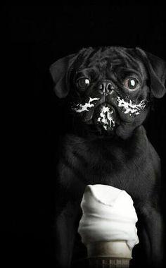 #animals #dog #pug