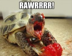 funny turtles. It's a tortoise actually....