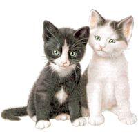 gato - Google Search