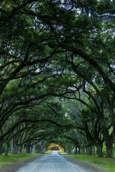 Savannah, Georgia • Wormsloe Plantation