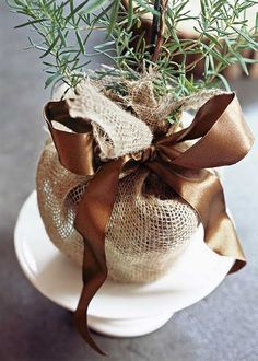 Rosemary plant wrapped in burlap.  Rosemary plants can readily be found in seasonal shapes like wreaths, Christmas trees, and topiaries.