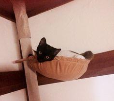 合体 #Cat #Baby #子猫 #黒猫 #白猫