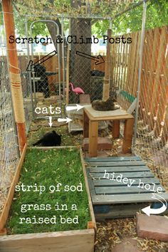 Im going to show you the catio outdoor cat enclosure that my 4 cats and various foster cats have used since April 2013 and one move which involved reconfiguring the enclosure set up. Outdoor Cat Enclosure, Diy Cat Enclosure, Foster Cat, Cat Cages, Cat Playground, Cat Garden, Outdoor Cats, Outdoor Cat Cage, Outdoor Cat Shelter