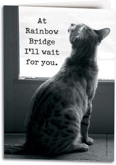 At Rainbow Bridge .all my sweet babies. Cat Quotes, Animal Quotes, Pet Loss Quotes, Crazy Cat Lady, Crazy Cats, I Love Cats, Cute Cats, Pet Loss Grief, Loss Of Pet