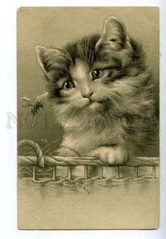 139866 Charming PUSSY CAT w/ FLY Vintage Embossed PC