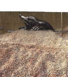 Roa's Summer: Part III, Berlin + Gent - unurth | street art #streetart #art  #roa