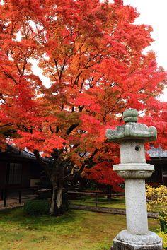 真っ赤な紅葉につつまれた京都鷹が峰の源光庵