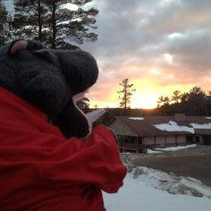 Harvey loved watching tonight's gorgeous sunset! #lentoutside #skylake14