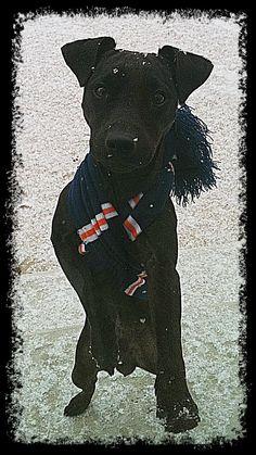 My Patterdale Terrier pup Riley!