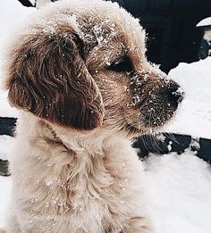 Golden Retriever Puppies Golden Retriever puppy playing in the snow Cute Little Animals, Cute Funny Animals, Little Dogs, Cute Dogs And Puppies, I Love Dogs, Doggies, Adorable Puppies, Cute Pets, Pet Dogs