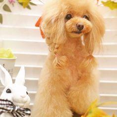 2016.11.30 ・ 1週間前にサロンで撮ってもらった写真✨ トリミング後のいちばん綺麗な時(*´艸`) 片足上がってますよー! ・ ・ チョーカー着画の紹介遅れてます。送ってくださった皆さま、もう少しお待ちください🙇♀️ ・ #プードル#トイプードル#トイプー#トイプードル部#犬#わんこ#愛犬#犬バカ部#いぬら部#イヌスタグラム#ジェンダーレスワンコ #poodle#toypoodle#dog#petstagram#doglover#igcutest_animals#todayswanko#dog_features#happy_pet#petoftoday#east_dog_japan#dogstagram#dogslife#dogs_of_instagram