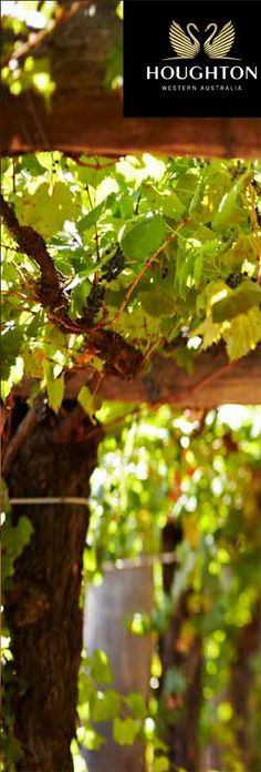 Missing the grape vines in the Swan Valley Western Australia High Desert Landscaping, Perth Western Australia, Grape Vines, Wines, Things To Do, Swan, Landscapes, Memories, Drink