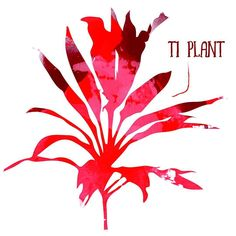 Every week we pick a color or a theme at the farm this week is.. red! There are so many interesting yummy medicinal and vibrant plants growing around the farm take this Ti Plant. Its official name: Cordyline Fruticosa; a flowering plant in the Asparagus family also known as the good luck plant. This treasure can grow up to 4m in a tropical environment and hold many medicinal features such as aid nerve and help as a muscle relaxation. In ancient tales from Mexico to Indonesia its thought to…