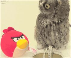 I love owls. Their faces are always hilarious.