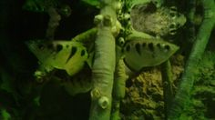 Water fish  Squirts out water for there food