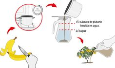 Hágalo Usted Mismo - ¿Cómo hacer fertilizantes caseros?