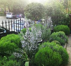 Motif Garden Design - planting design in the new town Plant Design, Garden Design, Edinburgh Scotland, Planting, Design Projects, Nature, Beautiful, Plants, Naturaleza
