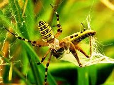 Top 10 Most Scary Spiders - Trippy Nature Common Spiders, Large Spiders, Scary Spiders, Giant Huntsman Spider, Spider Species, Online Trivia, Wolf Spider, Brown Recluse, Black Widow