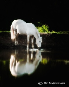 Once Upon a Time, there was a white pony that lived by the lake.  Every day, she.......