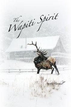 The Wapiti Spirit: Photographic Journey with Wild Bull Elk by Annette Marshall http://www.amazon.com/dp/B00JETF0I0/ref=cm_sw_r_pi_dp_5yPNwb0ABRH47