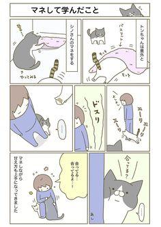 【期間限定!毎日連載】「うちの猫がまた変なことしてる。」第4話