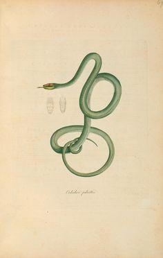 Abbildungen zur Naturgeschichte Brasiliens / - Biodiversity Heritage Library/Smithsonian Libraries