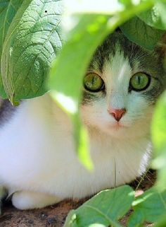 jungle kitty...and look at those beautiful green eyes