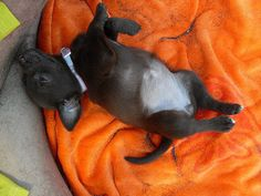 Pets on the beach: puppy lying on a towel