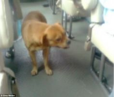 Desperate dog searches bus every day after its owner vanished without a trace