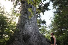 biggest spruce tree in the world! | Flickr - Photo Sharing!