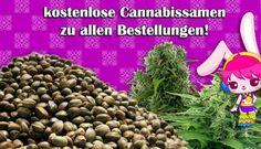 http://www.smartbunny.de/AyahuascaYage/AyahuascaKit1. aspx - spice