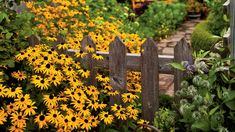 Unlike walls, most fences aren't solid, so plants don't have to choose one side or the other. Perennials and reseeding annuals can start out on one side, spread