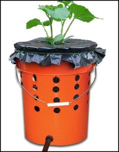Alaska Grow Buckets are a great way to grow your own food using minimal space. Pick up all the supplies you need at your local hardware store!