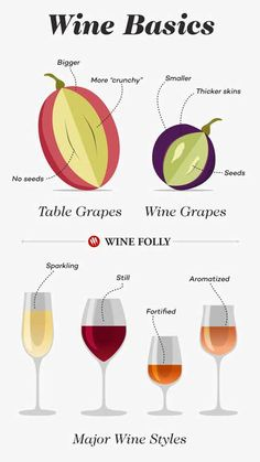 Wine Basics - A Beginner's Guide to Drinking Wine, Food And Drinks, Back to the Basics with Wine 101 - A Beginner& Guide to Drinking Wine Guide Vin, Wine Guide, Wine Facts, Wine Chart, Wine Folly, Wine Education, Types Of Wine, Wine Parties, Vitis Vinifera