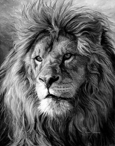 """Lucie Bilodeau's Newsletter - The Art of Lucie Bilodeau """"Portrait of a Lion"""" used for a magazine cover Lion Head Tattoos, Mens Lion Tattoo, Tattoos Of Lions, Lion Back Tattoo, Lion Images, Lion Pictures, Lion And Lioness, Lion Of Judah, Lion Photography"""