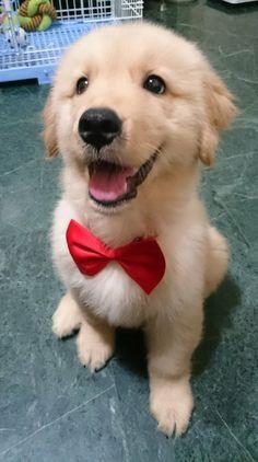 Tão fofo até parece que o cachorrinho diz : Estou pronto p'ra o casamento!