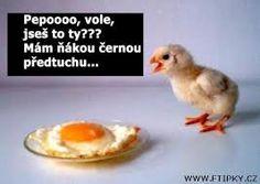 víte kdy kuře pípne na posled ? V tesku u pokladny!!!