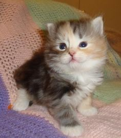 cute kittens & cats photos | ... cute cat photos cute cats cute kitten photos cute kittens kittens pets