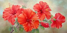Marianne Broome — Indian River Hibiscus (720x357)
